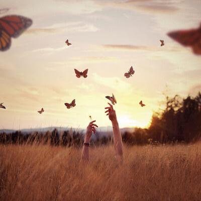 campo borboleta - fazer psicoterapia
