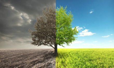 De onde veio a Análise Bioenergética