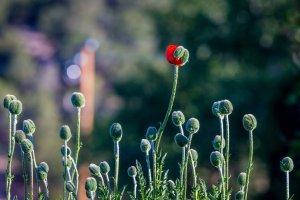 Transformação Análise Bioenergética