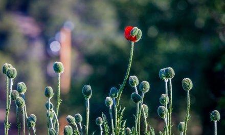 Transformação através da Análise Bioenergética
